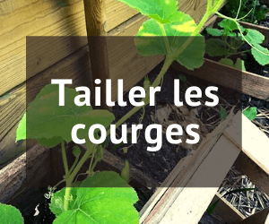 tailler les courges
