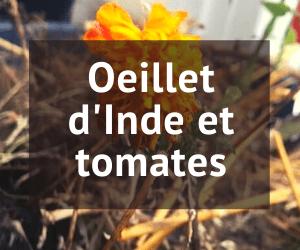 oeillet d'inde et tomate
