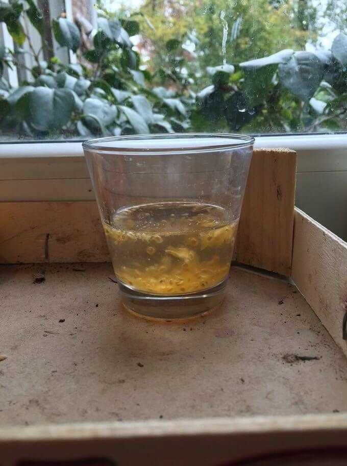 R cup rer et conserver les graines de tomates jardin - Comment conserver des courgettes du jardin ...