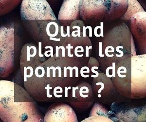 Quand planter les pommes de terre en 2021 ?
